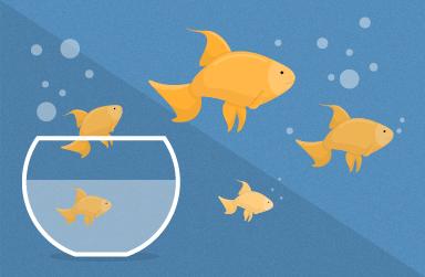 Goldfish_content